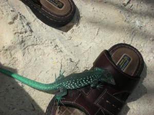 There's an Iguana in my shoe!