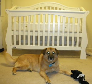 Dr. Robyn's Dog Casey and the crib